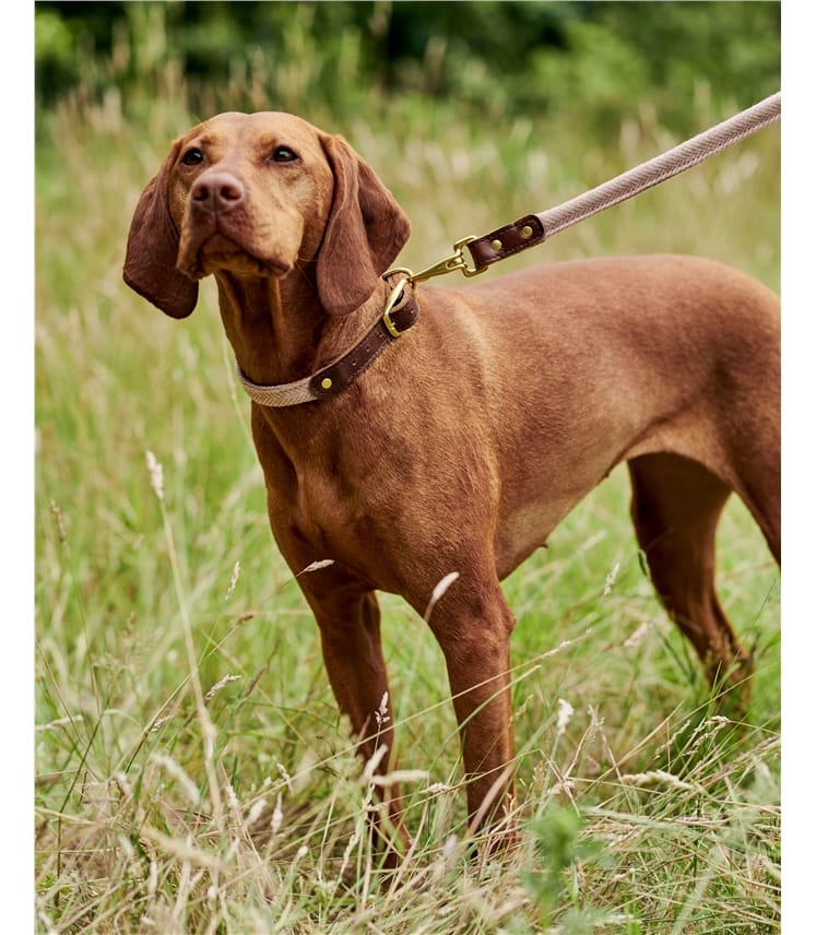 Pink Herringbone Dog Collar